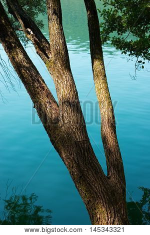 Close up of a tree trunk over the water with reflections - Lago di Levico (Levico Lake) Trentino Italy