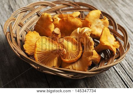 Fresh chanterelle mushrooms on a wood close up