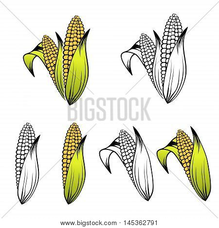 Illustration of Different Corn Collection Over White Background
