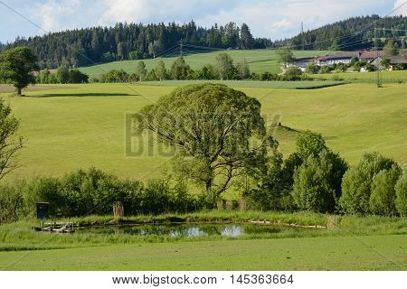 romantic countryside in spring with a pond meadows and fields