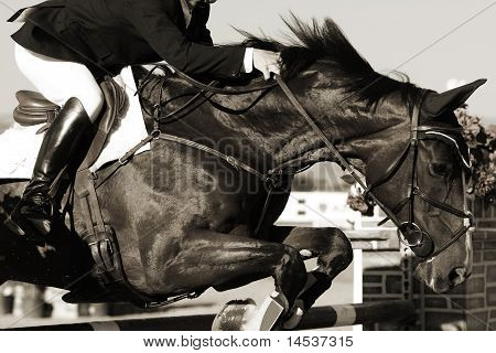 Equestrian Horse and Rider in Action