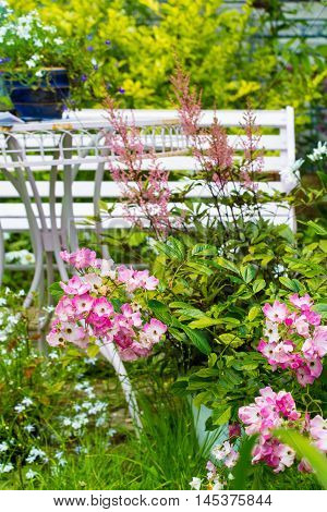 Beautiful home garden in Summer with rose ballerina and white bench.