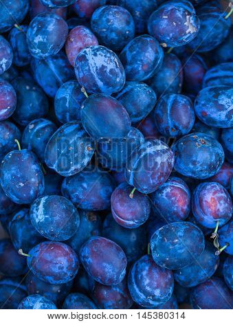 Blue Plums Background. Fresh Fruits.