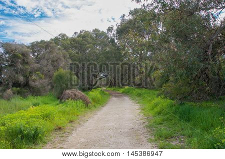 Entrance path in diminishing perspective through a Bibra Lake natural bushland reserve with lush greenery under a blue sky with clouds in Western Australia.