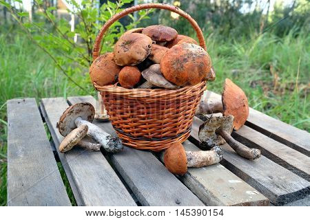 Still life with many edible mushrooms in brown wicker basket on wooden table closeup wooden table. Front view outdoors against green grass