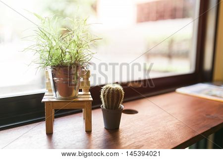 Cactus woodcactus on wood Still Life Natural Three Cactus Plants on Vintage Wood Background Texture