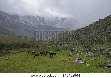 Mountain Valley Panorama With Horses Near From Punta Union Pass. Huascaran National Park, Cordillera