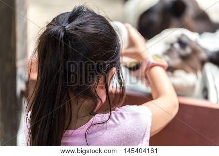 Child Feeding Milk To Goat In Farm