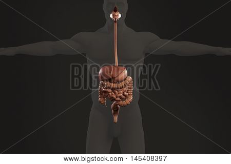Human anatomy xray view of digestive system, showing stomach, colon, intestines and outline of body on plain background. 3d illustration