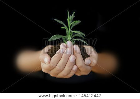 Child hands protecting a piece of land, a small green sprout