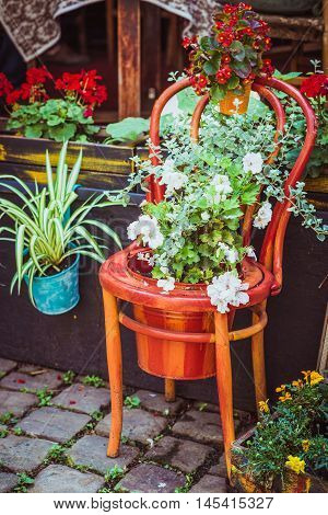 Old wooden chair on the pavement flowerpots decorated with white and red flowers