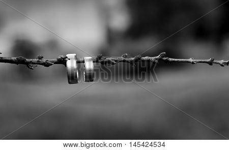 Two gold and silver wedding rings hanging on the wood branch with small buds black and white photo