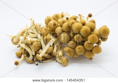 Brown Shimeji mushrooms on white background, isolated