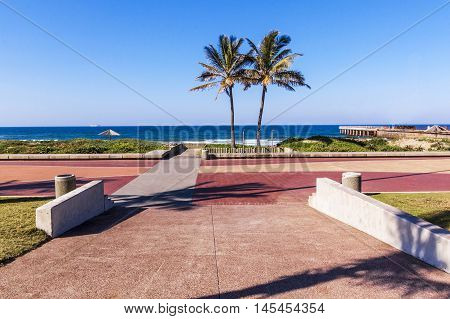 Two Palm Trees And Paving Leading Into Durban Beach