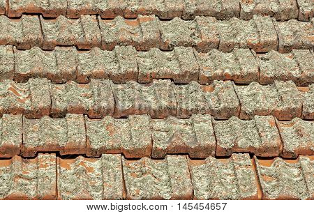 Terracotta Roof Tiles Covered In Lichen Fungus