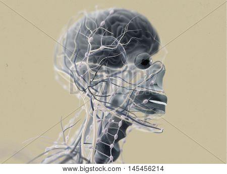Brain, arteries, nerves, lymph nodes. Human anatomy. 3D illustration. Plain background