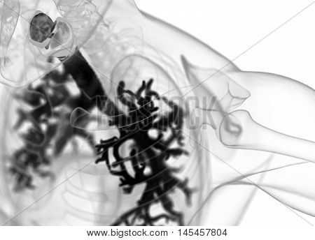 Human bronchi and trachea, xray like image. 3d illustration