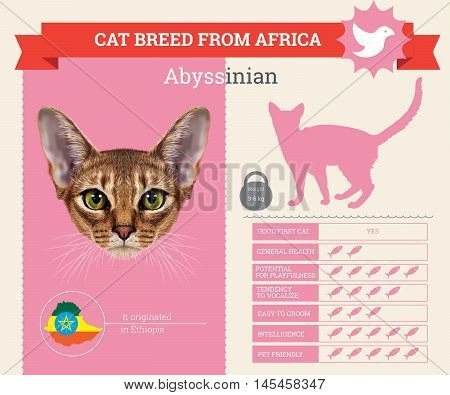 Abyssinian Cat breed vector infographics. This cat breed from Africa