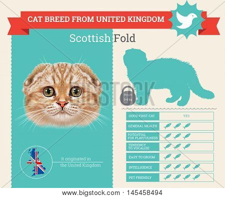 Scottish Fold Cat breed vector infographics. This cat breed from United Kingdom