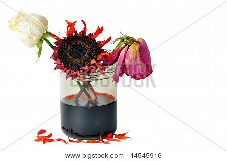 Deads Flowers In Glass Jar On White