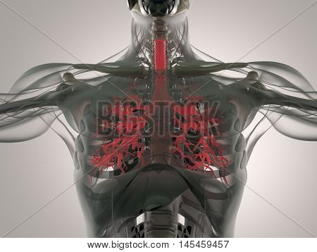 Bronchi, human anatomy lungs, futuristic scan technology. 3d illustration.