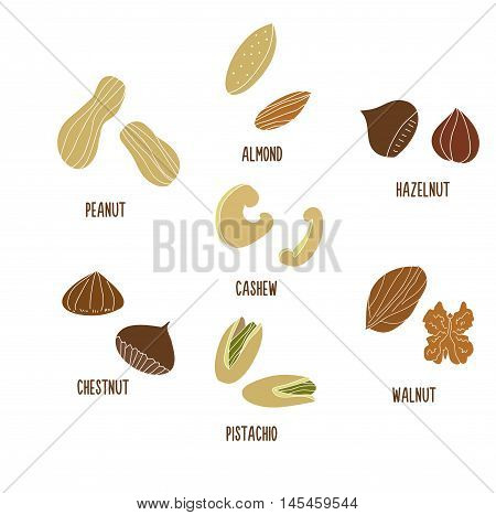 Vector illustration of various nuts. Peanut almond hazelnut cashew chestnut walnut pistachio