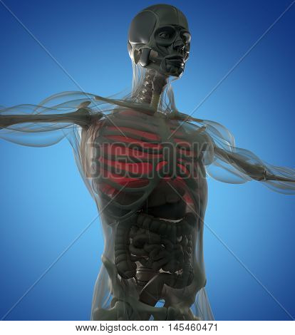 Human anatomy lungs. Futuristic scan. Xray like view. 3d illustration.