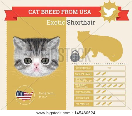 Exotic Cat breed vector infographics. This cat breed from USA