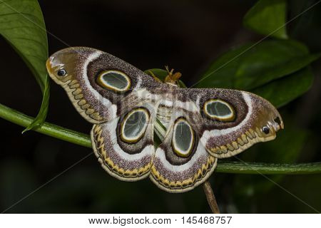 Night Tropical Butterfly Wildlife Exotic Nature Impression