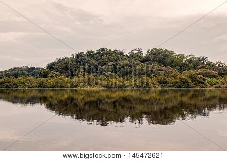 Tropical Trees From Amazonian Jungle Cuyabeno Wildlife Reserve South America