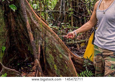 Deforestation Environmental Problem Rainforest Destroyed For Oil Palm Plantations Cuyabeno Wildlife Reserve Ecuador