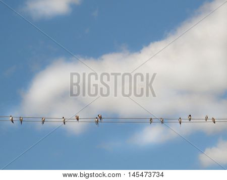 Swallows sitting on a wire against the sky