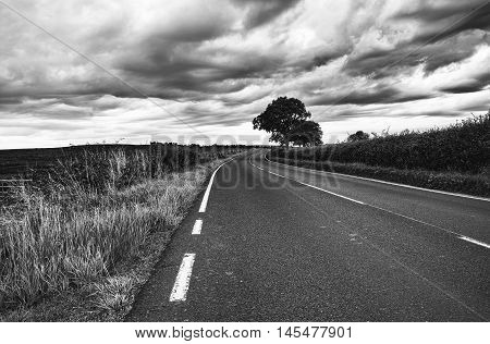 Winding road leding to lone tree under stormy sky