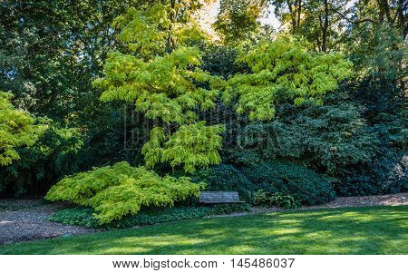 A bench sits beneath bright green leaves.