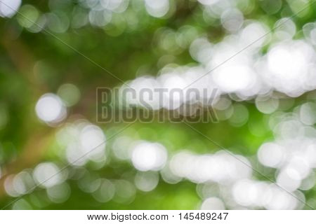 green from tree / blurred tree and bokeh tree / Blurred nature background / green and white background from tree in sun light.