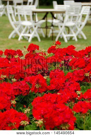 Geranium Flowerbed At Wedding Reception