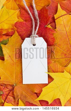 Price tag from recycled paper on twine string on autumn leaves background.