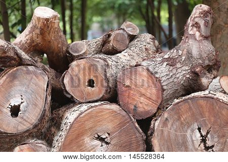 pile of timber is cut out into from forest in illegal loggers and environmental destruction.