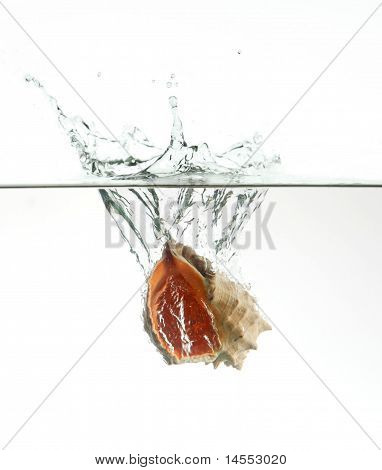 Seashell In Water Splash Isolated On White Background