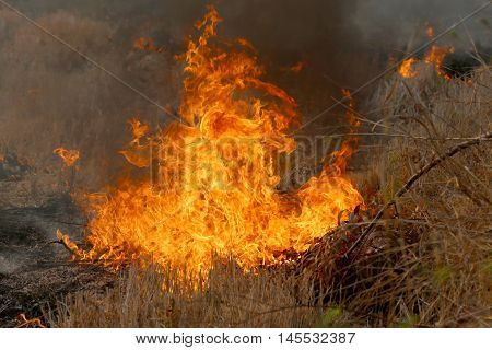 Summer wildfires burning in the Forest at rural area of Khon KaenThailand due to the very hot weather.