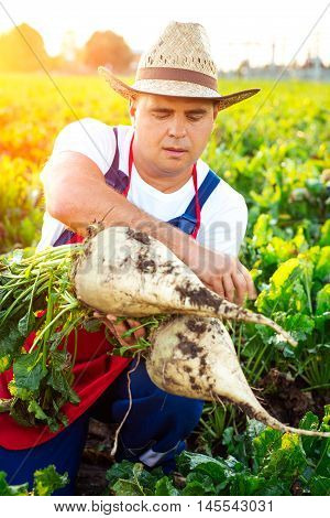 Satisfied farmer holding sugar beets on the field