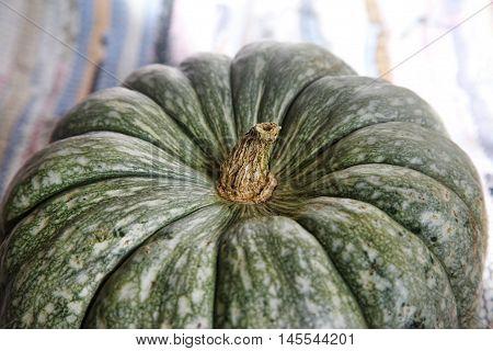Big green pumpkin close up in studio