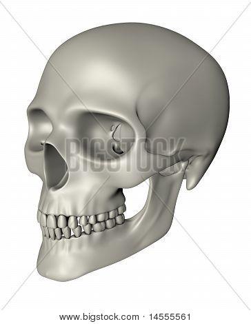 Human Skull - Oblique Projection