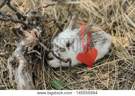 Cute Little Rabbit With Heart
