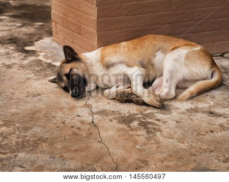 A stray dog lying beside the building.