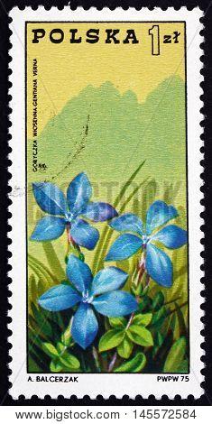 POLAND - CIRCA 1975: a stamp printed in Poland shows Gentian and Tatra Mountains Centenary of Polish Mountain Guides Organizations circa 1975