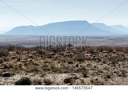 Three Mountains - Mountain Zebra National Park
