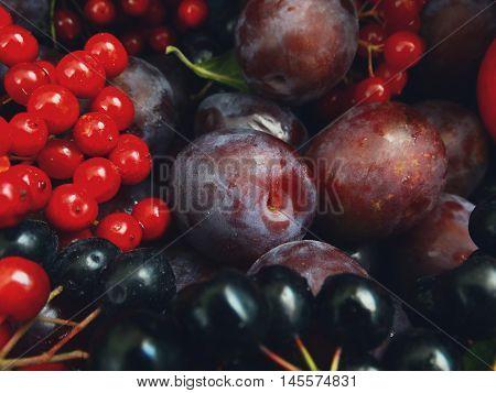 Juicy plum on the table season autumn harvest berry fruit currants black viburnum red food tasty appetite vitamins benefit nutrition background garden september october nature plant.