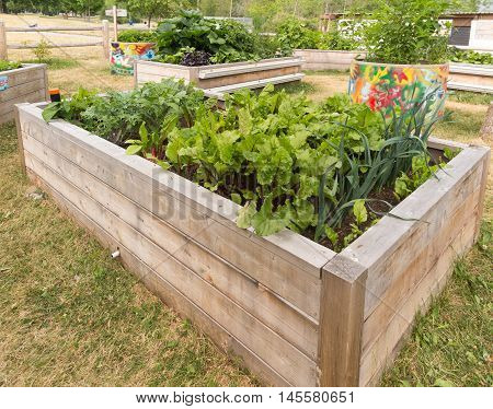 Raised garden beds in neighborhood garden with veggies