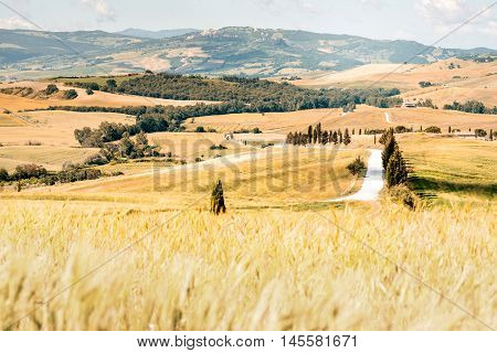 Beautiful tuscan landscape view on the wheat field near Montepulciano town in Italy